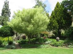 Caroline's garden